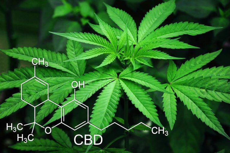 Jak wygodnie pozyskać sprzęt do uprawiania marihuany?